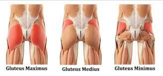 butt-workouts-anatomy