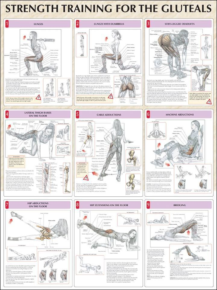 Glutes workout program