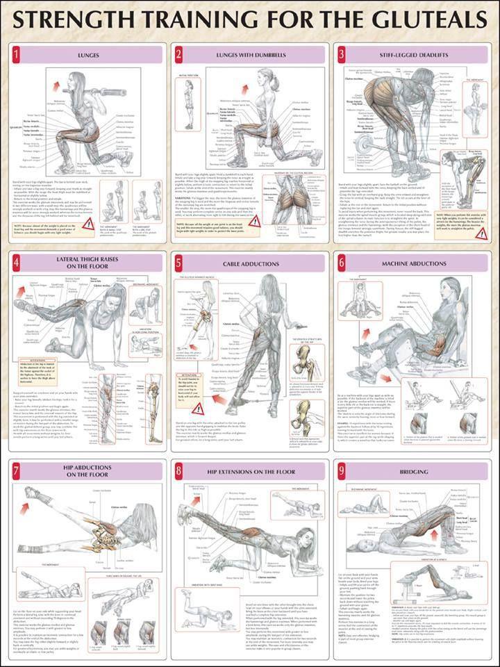 Butt Anatomy Workouts