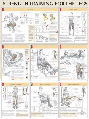 legs workout anatomy