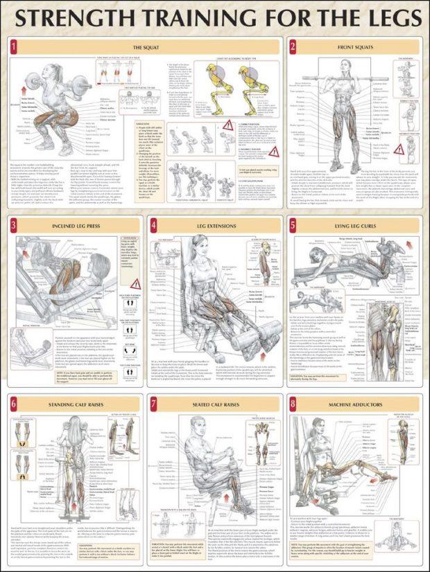 Top 8 Leg Workout ANATOMY