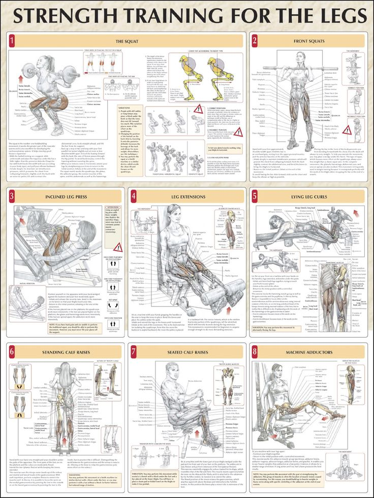 Top 8 Leg Workout ANATOMY