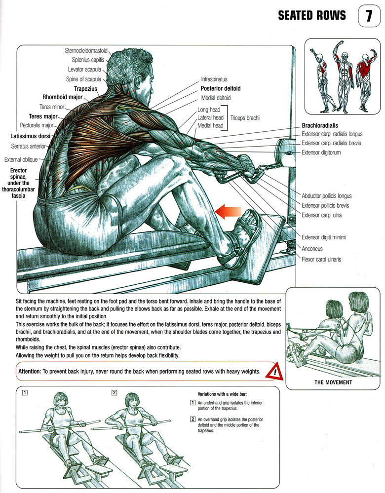 Wide-Grip Seated Row  Close-Grip Seated Row