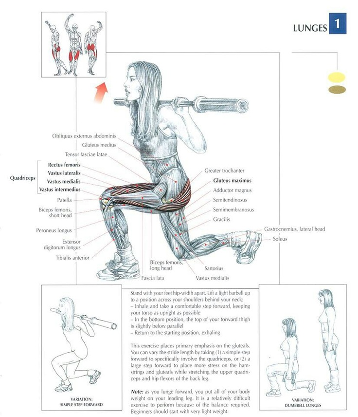The LUNGE Exercise Muscle Anatomy