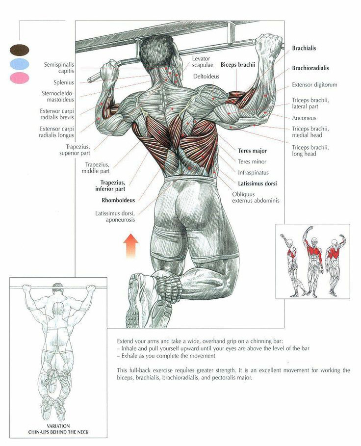 The Pullup Exercise Anatomy