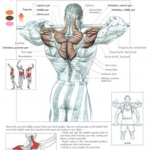 The Anatomy of The Upright Row Workout
