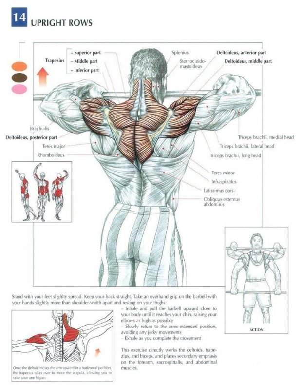 The Anatomy of The Upright Row Exercise