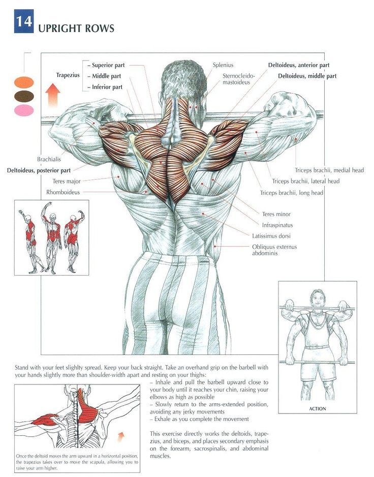 9 Strength Training Workouts for the Back Muscle ANATOMY