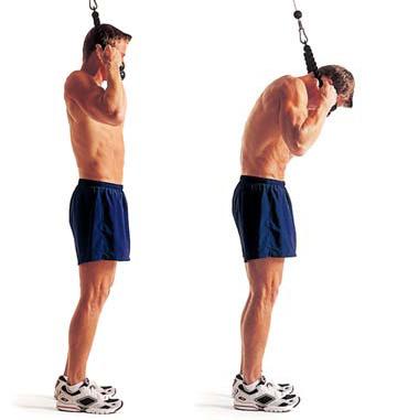 best-men-ab-workout-db10