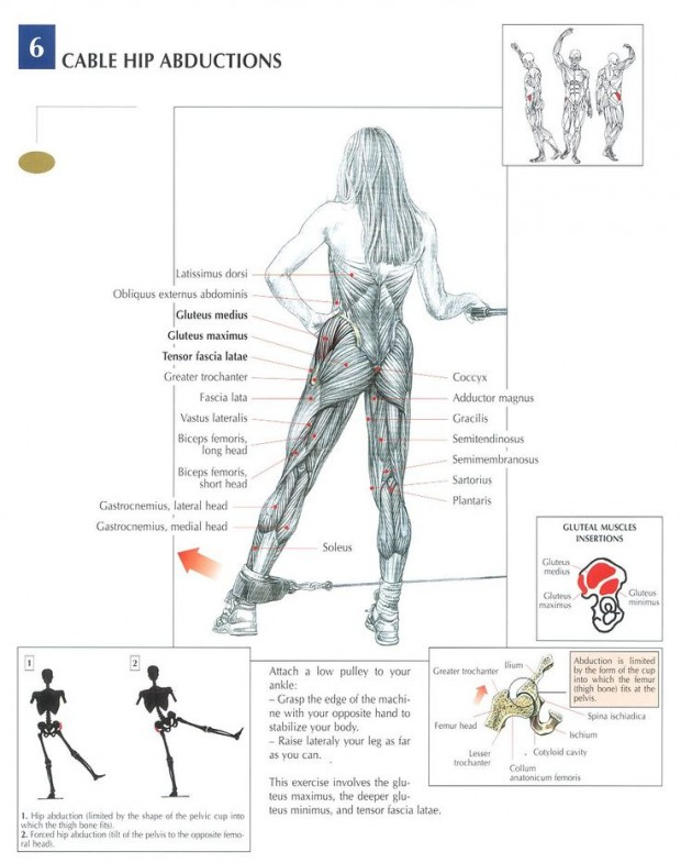 Cable Hip Abduction Benefits and Anatomy