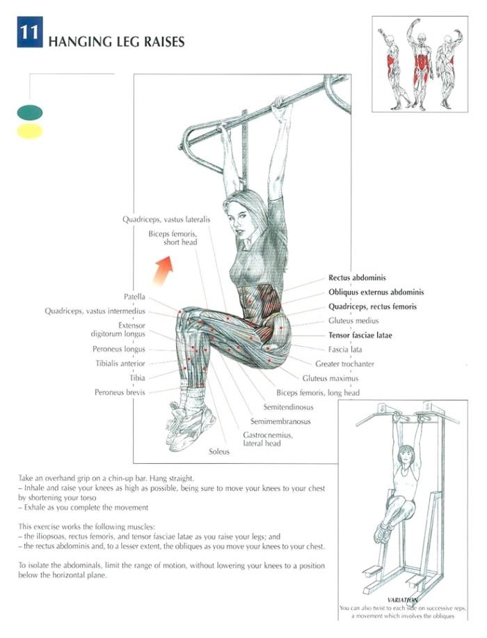hanging_leg_raise-anatomy
