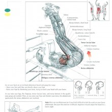 The ANATOMY Of Leg Raise