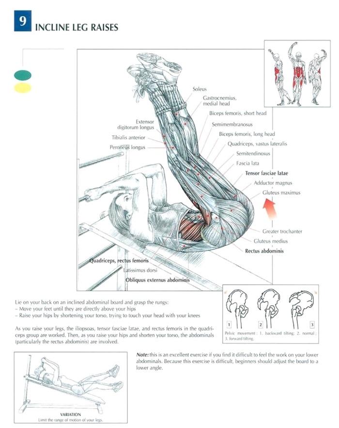 leg raise anatomy