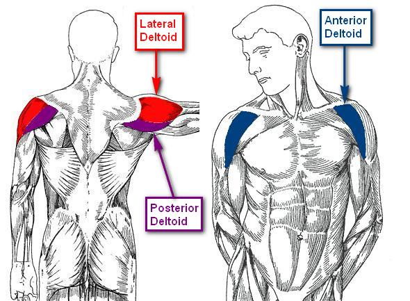 Rear Delts Shoulder Workouts