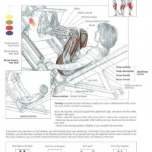 Tha ANATOMY of Leg Press