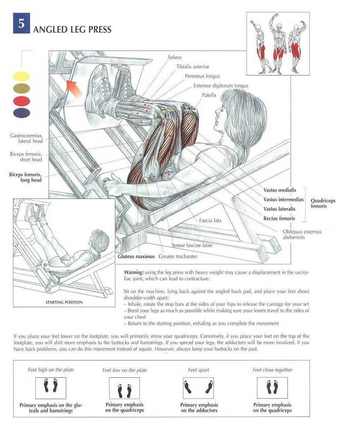 leg-press-anatomy2