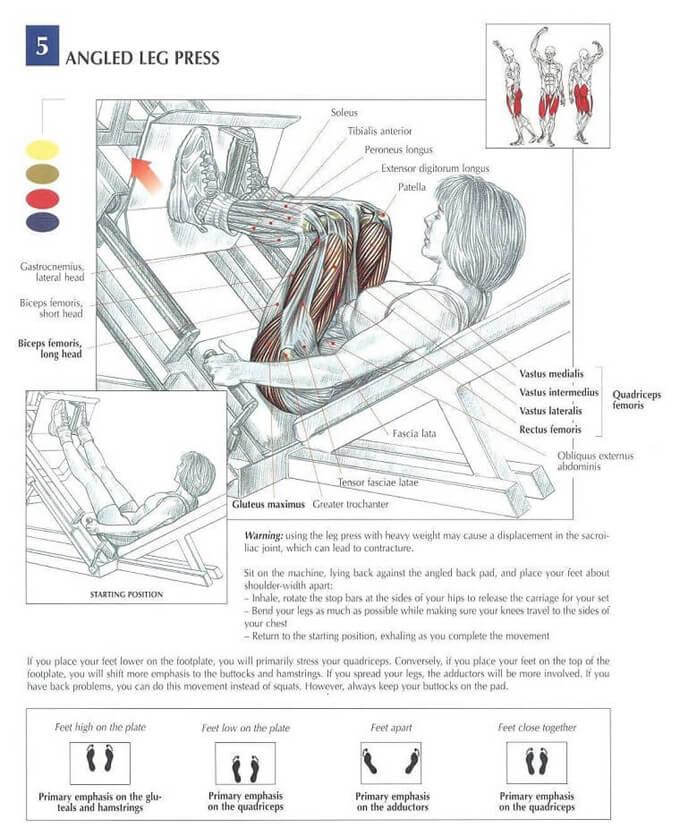 leg-press-anatomy2