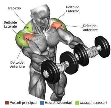 The Shoulder Workout Anatomy