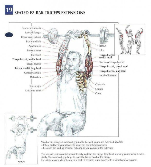 Best Tricep Isolation Workout Muscle Anatomy