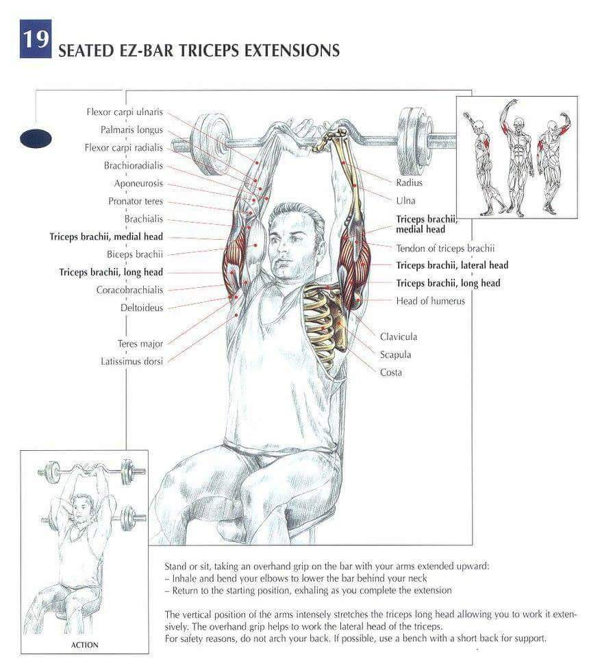 Seated-ex-bear-tricep-extension