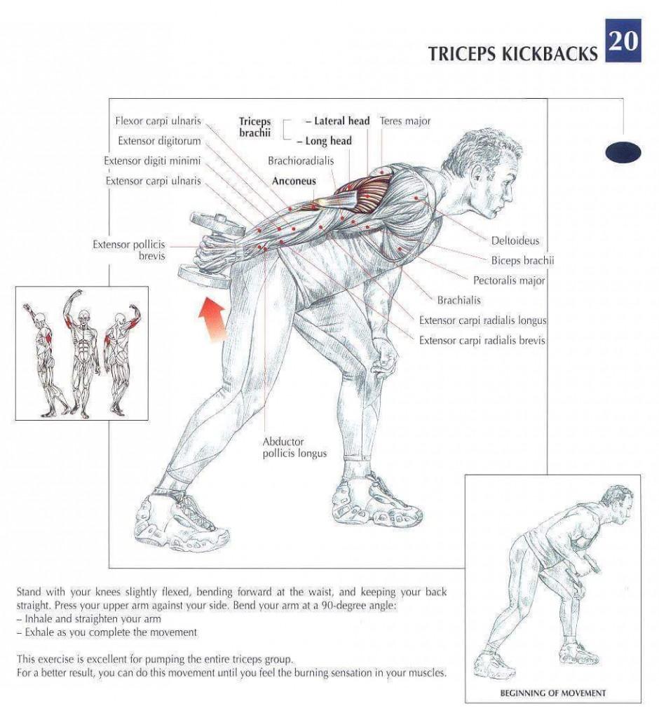 TricepKickback