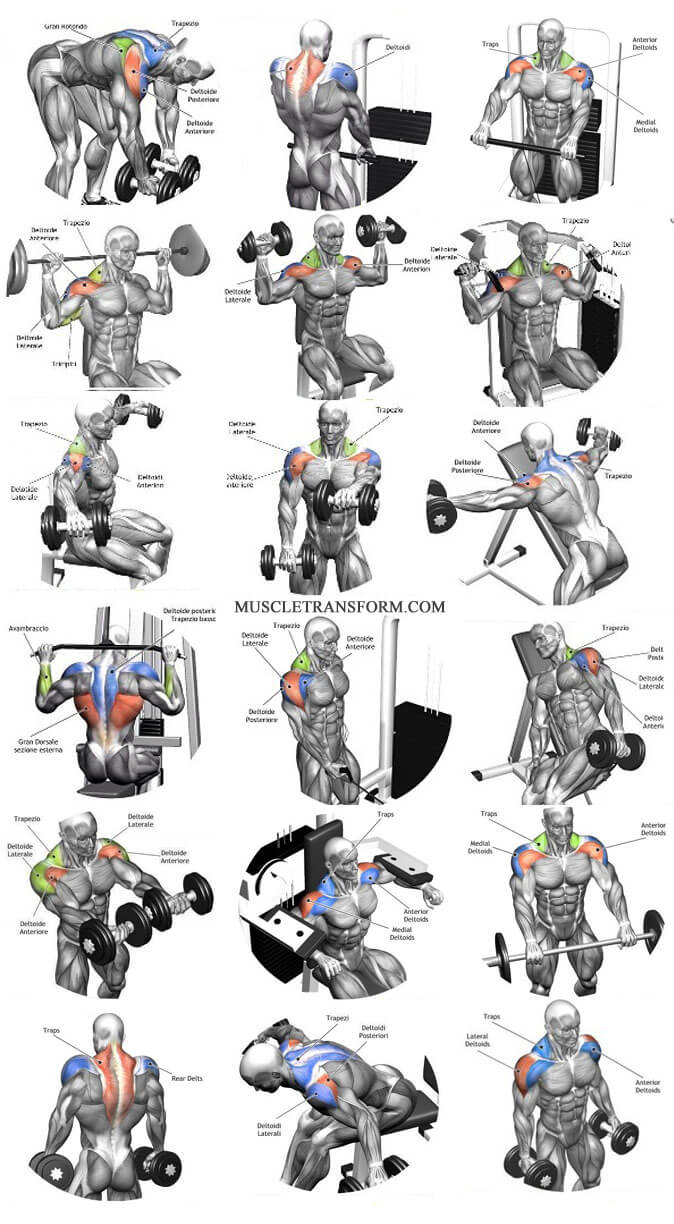 The Ultimate Shoulder Workouts Anatomy