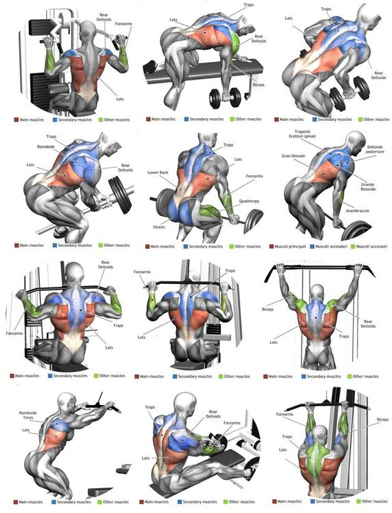 back lats exercise workout