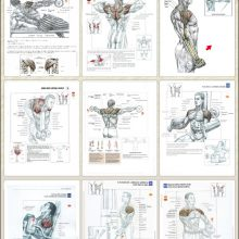 Rear Shoulder Workout Anatomy For Muscle Mass
