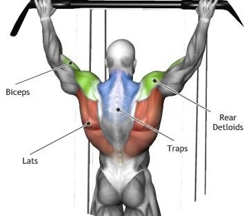 PULL UPs-muscle-work